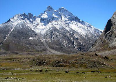 Himalayan-Dragon-60